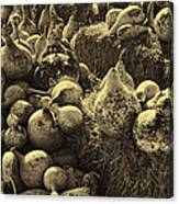 The Produce Of The Earth In Sepia Canvas Print