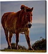 The Przewalski Horse Equus Przewalskii Canvas Print