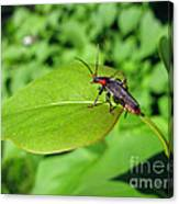 The Rednecked Bug On The Leaf Canvas Print