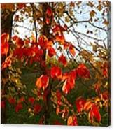 The Reds Of Autumn Canvas Print
