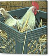 The Rooster That Laid A Golden Egg Canvas Print