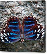 The Royal Blue Butterfly Canvas Print