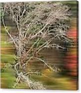 The Running Tree Canvas Print