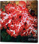 The Scarlet Soft Coral. Similan Islands Canvas Print