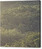 The Schlerophyll Forest Canopy Canvas Print