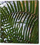 The Shade Of A Fern Canvas Print