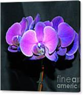The Shade Of Orchids Canvas Print