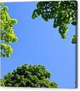 The Sky Through Trees Canvas Print