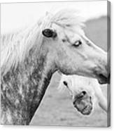 The Smiling Horse Canvas Print
