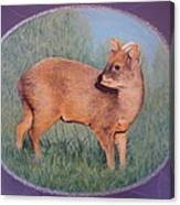 The Southern Pudu Canvas Print