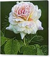 The Splendor Of The Rose Canvas Print