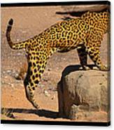 The Spotted Cat Canvas Print
