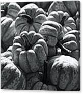 The Squash Harvest In Black And White Canvas Print