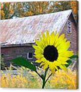 The Sunflower And The Barn Canvas Print