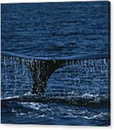The Tail Flukes Of A Humpback Whale Canvas Print