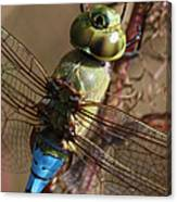 The Thorax Canvas Print