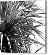The Tourist Pineapple Black And White Canvas Print
