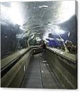 The Travelator At The Underwater World In Sentosa In Singapore Canvas Print