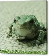 The Tree Frog Canvas Print