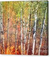 The Trees And The Colour Canvas Print