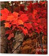 The True Beauty Of Autumn Canvas Print