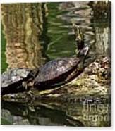 The Turtles Canvas Print