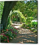 The Vineyard Walk Canvas Print