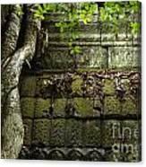The Wall Ta Prohm 2 Canvas Print