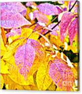 The Warm Glow In Autumn Abstract Canvas Print