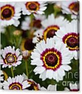 The White Field Canvas Print