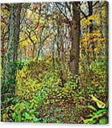 The Woods In Autumn Canvas Print