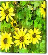 The Yellow Daisies  Canvas Print