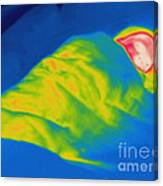 Thermogram Of A Child Sleeping Canvas Print