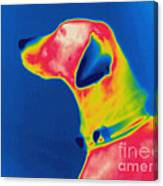 Thermogram Of A Dog Canvas Print