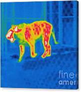 Thermogram Of A Tiger Canvas Print