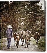 They Walk Together Canvas Print