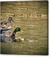 Thin Ice Wet Duck Canvas Print