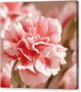 Think Pink Canvas Print