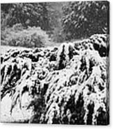 Think Snow Canvas Print