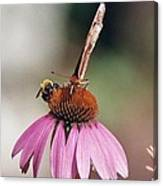 This Is My Flower Canvas Print