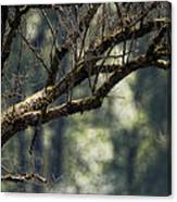 This Is Our World No. 9 - Lets Branch Out Canvas Print