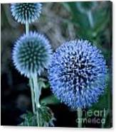 Thistle In Bloom Canvas Print