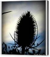 Thistle In The Sky Canvas Print