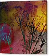Thistle Lanterns Canvas Print