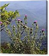 Thistle On The Mountain Canvas Print