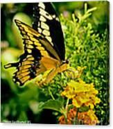 Thoas Swallowtail #1 Canvas Print