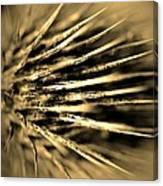 Thorny In Sepia Canvas Print