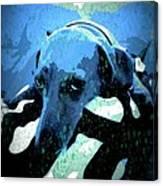 Those Puppy Dog Eyes Canvas Print