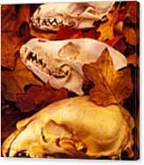 Three Animal Skulls Canvas Print