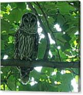 Three Barred Owls Canvas Print